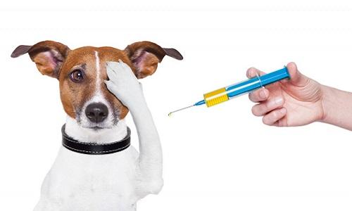 Комплексная прививка для собак цена москва